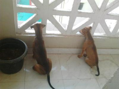 Free puppies for loving home