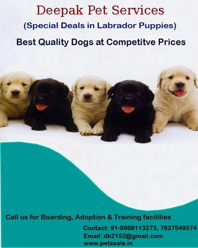 Best Pets are available for sale in Chandigarh