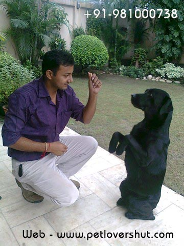 Dog Boarding and Training Centre in Delhi  - 1