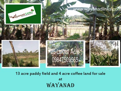 13 acre paddy field and 4 acre coffee land for sale at Panamaram  - 1