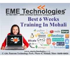 Six Weeks Training In Mohali