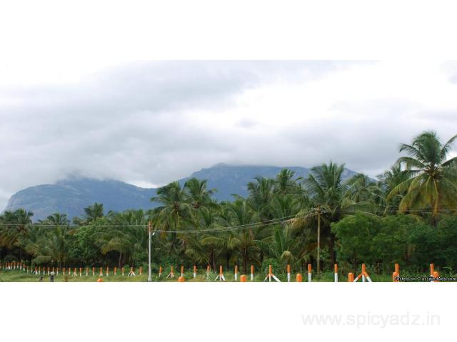 Agricultural Land with Coconut Farm is Sale in Pollachi - 1