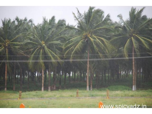 Agricultural Land with Coconut Farm is Sale in Pollachi - 2