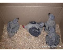 FERTILE OSTRICH AND PARROTS EGGS WITH PARROTS BIRDS AVAILABLE FOR SALE. whatsApp  +447424514820