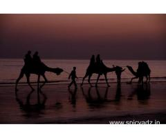 BOOK RANN OF KUTCH FESTIVEL TOUR PACKAGE FROM TEMPLETOURONLINE GET 20% OFF
