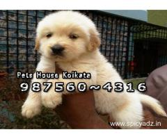 GOLDEN RETRIEVER Dogs sale At ~ DHANBAD