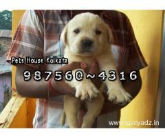 LABRADOR Dogs for sale At ~ RAJARHAT