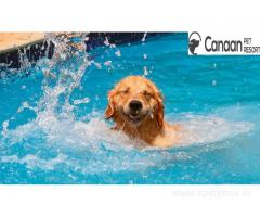Swimming for dogs in Bangalore