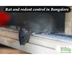Complete Rodent Control in Bangalore with TechSquadTeam