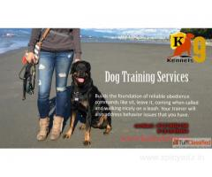 Dog Training in Medchal Hyderabad