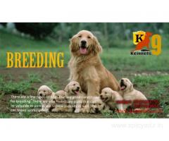 Dog Breeding in Kapara Hyderabad