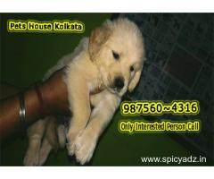 Champion Quality GOLDEN RETRIEVER Dogs Sale At ~ DARJELING