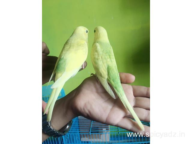 Kushi Pakshi (Exotic birds Aviory) - 1