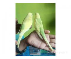Kushi Pakshi (Exotic birds Aviory)